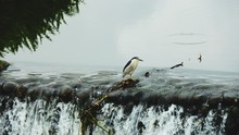 Bird Perching On Rock In River