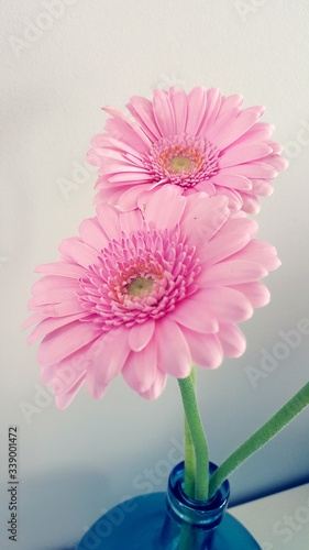 Fotografie, Obraz Close-up Of Pink Gerbera Daisies In Vase At Home