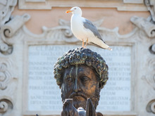Seagull Perching On Statue
