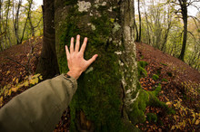Man's Hand Touching Tree Trunk...