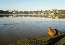 Capybara By Lake Against Sky