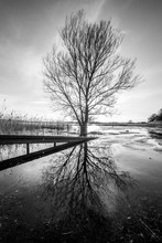 View Of Bare Tree In Swamp