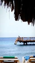 Pelican Perching On Pier