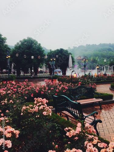Fototapeta Pink Flowers In Park obraz na płótnie
