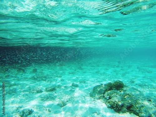 Photo Fishes Swimming In Sea