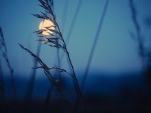 Low Angle View Of Plant Against Full Moon At Dusk