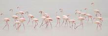 Flock Of Flamingoes In Water Against Sky