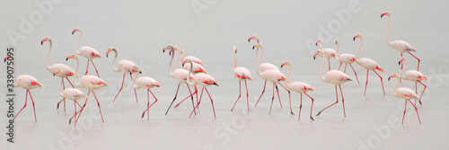 Obraz na płótnie Flock Of Flamingoes In Water Against Sky