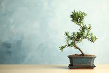 Japanese Bonsai Plant On Woode...
