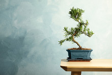 Japanese Bonsai Plant On Woode...
