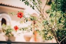 Red Hibiscus Flowers Growing On Tree
