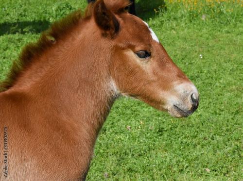 Pretty Colt horse c2020Rachelle