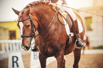 A beautiful elegant chestnut horse with a braided mane participates in dressage competitions with a rider in the saddle, illuminated by sunlight.