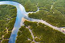 Aerial View Of River Amidst Green Mangrove Forest