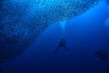 Scuba Diver And School Of Fish...