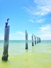 Birds Perching On Wooden Poles...