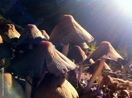 Close-up Of Sunlight Falling On Mushrooms Growing In Forest Fototapete