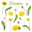 Dandelion Flowers Realistic Set
