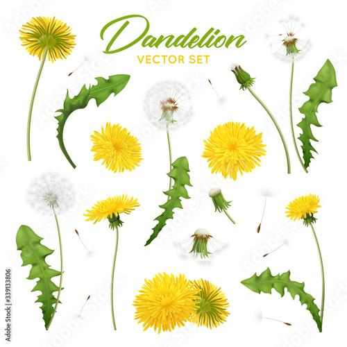 Fototapeta Dandelion Flowers Realistic Set obraz