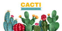 Cacti Colored Background
