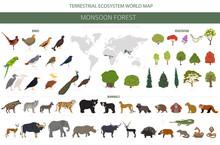 Monsoon Forest Biome, Natural Region Infographic. Terrestrial Ecosystem World Map. Animals, Birds And Vegetations Design Set