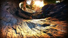 Close-up Of Hollow Tree Trunk