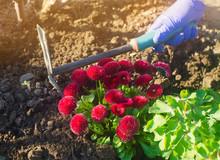 The Gardener Loosens The Soil ...