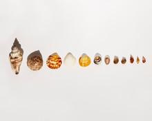 Seashells On White Background