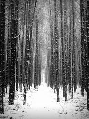 Ścieżka w lesie pokrytym śniegiem