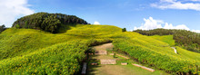 Panoramic View Of Idyllic Thung Bua Tong Or Mexican Sunflower At Mae Hong Son Province, Thailand