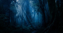 Magic Forest With Points Of Li...