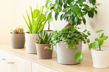 Green Houseplants Cactus Succu...