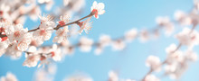 Spring Background, Panorama, B...