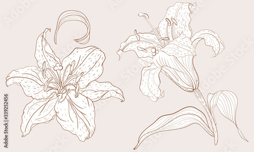 Fotografia, Obraz Oriental Lily inflorescence and steam flower