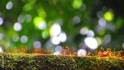 Obraz na plátně Close-up Of Moss On Rock