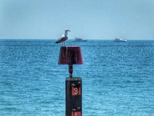 Seagull Perching On Lamp Shade Against Sea