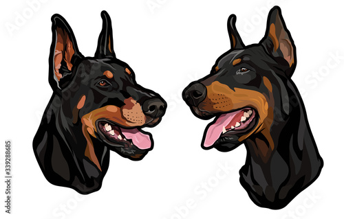 dog heads, doberman pinscher breed, full-color illustration Fototapete