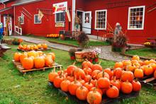 Pumpkins And Autumn Decoration...