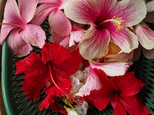 Directly Above Shot Of Hibiscus Flowers In Basket