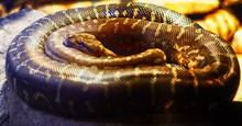 High Angle View Of Snake On Rock