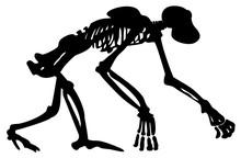 Silhouette Skeleton Chimpanze...
