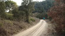 Mountain Biker Through A Forest