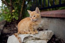 Cute Stray Kitten Hidden In Garden In Flowers