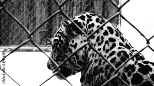 Foto Close-up Of Leopard In Cage