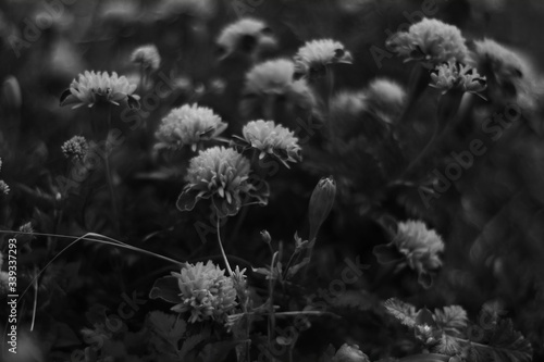 Fototapeta High Angle View Of Flowers Blooming Outdoors obraz