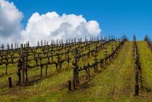 Sonoma Valley Vineyard, Glen E...