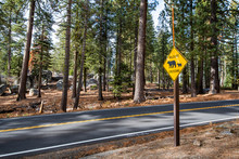 Wildlife Crossing Bear Sign On The Road In Yosemite National Park, California, USA.