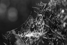 Close-up Of Wet Spider Web On ...