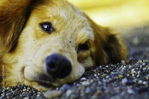 Canvas Close-up Of Dog Relaxing On Field