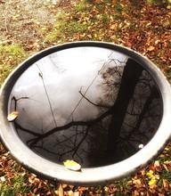 Reflection Of Tree On Birdbath...